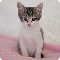 Adopt A Pet :: Raisin - Chandler, AZ