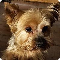 Adopt A Pet :: Tonka - Cary, NC