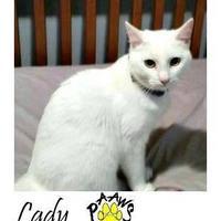 Adopt A Pet :: Lady - Newburgh, IN