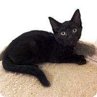 Adopt A Pet :: Dusty - Lathrop, CA