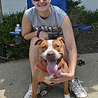 Adopt A Pet :: Brody - Cranford, NJ