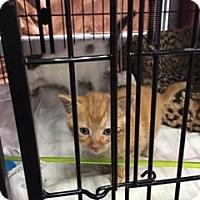 Adopt A Pet :: Spencer - Nesquehoning, PA