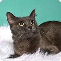Adopt A Pet :: Buttercup - Tomball, TX