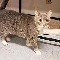 Adopt A Pet :: Misty - Indianola, IA