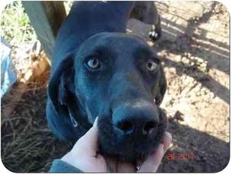 Plott Hound Mix Dog for adoption in Foster, Rhode Island - Jake
