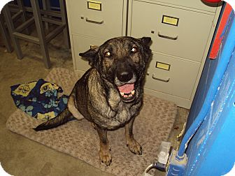 Shepherd (Unknown Type) Mix Dog for adoption in BLACKWELL, Oklahoma - Molly