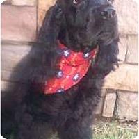 Adopt A Pet :: Reggie - Sugarland, TX