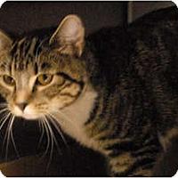 Adopt A Pet :: Dixie - Lunenburg, MA