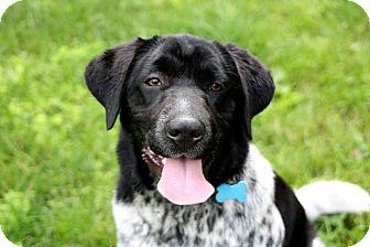 Australian Cattle Dog Mix Dog for adoption in Salem, New Hampshire - WHOOPI