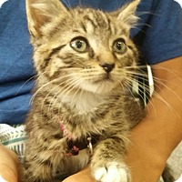Adopt A Pet :: Kirby - North Highlands, CA