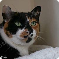 Adopt A Pet :: Augusta - Ann Arbor, MI