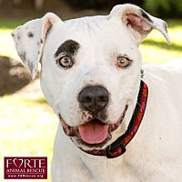 Adopt A Pet :: Petunia - Marina del Rey, CA