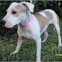 Adopt A Pet :: Abba - Houston, TX