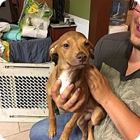 Adopt A Pet :: Stirup - North Brunswick, NJ
