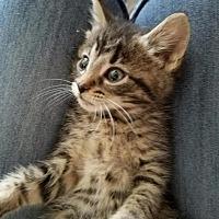 Adopt A Pet :: Mocha - Greensburg, PA