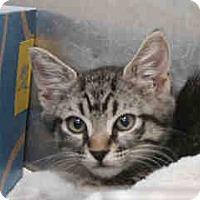 Adopt A Pet :: ON EUTHANASIA LIST! Only $35!! - Litchfield Park, AZ