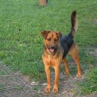 Adopt A Pet :: DOGEE - New palestine, IN