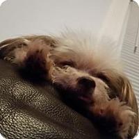 Adopt A Pet :: Scragglemuffin - Codorus, PA