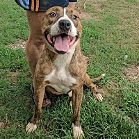 Adopt A Pet :: Manley - Covington, TN