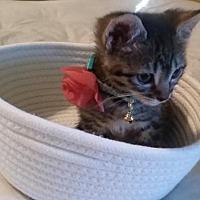 Adopt A Pet :: A439875 Sweet Pea - San Antonio, TX