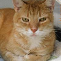 Adopt A Pet :: Jerome - Owensboro, KY
