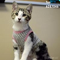 Adopt A Pet :: TAO - Conroe, TX