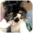 Photo 3 - Persian Cat for adoption in Beverly Hills, California - Tesla