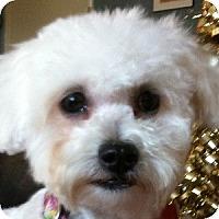 Adopt A Pet :: Paisley - La Costa, CA