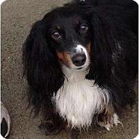 Adopt A Pet :: Oscar - Killingworth, CT