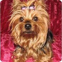 Adopt A Pet :: Fergi - Fort Mitchell, KY