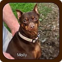 Adopt A Pet :: Molly (Courtesy) - Malaga, NJ
