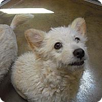 Adopt A Pet :: Bazy - Wickenburg, AZ