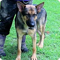 Adopt A Pet :: Ziggy - Naugatuck, CT