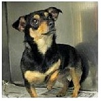 Adopt A Pet :: Pixie - Forest Ranch, CA