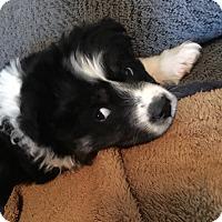 Adopt A Pet :: Odessa - Fredericksburg, VA