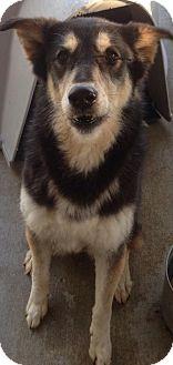 German Shepherd Dog Mix Dog for adoption in Valley Falls, Kansas - Layla