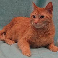 Adopt A Pet :: Eddie - Redwood Falls, MN