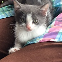 Adopt A Pet :: Pinky - Alpharetta, GA