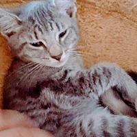 Adopt A Pet :: Pancake - Lewistown, PA