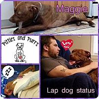 Adopt A Pet :: Maggie - Baltimore, MD