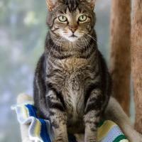 Adopt A Pet :: Mitch - Chicago, IL