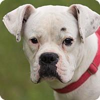 Adopt A Pet :: Andy - Dearborn, MI