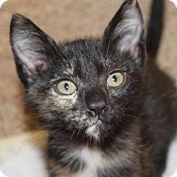 Adopt A Pet :: KAUAI - Red Bluff, CA