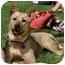 Photo 2 - Australian Cattle Dog/German Shepherd Dog Mix Dog for adoption in Los Angeles, California - Molly