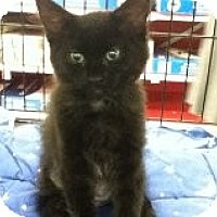 Adopt A Pet :: Lucy - Riverside, RI