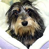 Adopt A Pet :: Alphy - New York, NY