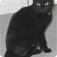 Adopt A Pet :: Misha - AUSTIN, TX