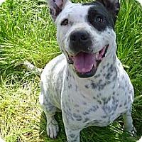 Adopt A Pet :: Kyanna sweet gal - Sacramento, CA