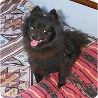 Adopt A Pet :: JACKSON T - Hesperus, CO