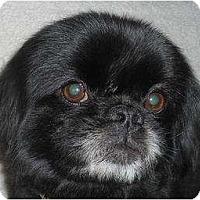 Adopt A Pet :: Orson - Rigaud, QC